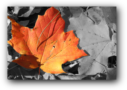 bw_leaf_wbackground